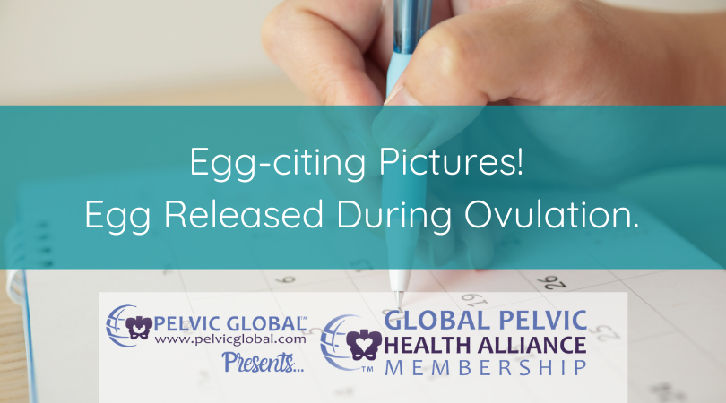 The first photos of a female human's egg release during ovulation.
