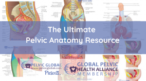 A resource with articles, pictures, and videos of pelvic anatomy all in the same place!