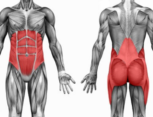 BEST Exercises for Abdominals, Glutes, and Adductors. Mind-Blowing Charts!