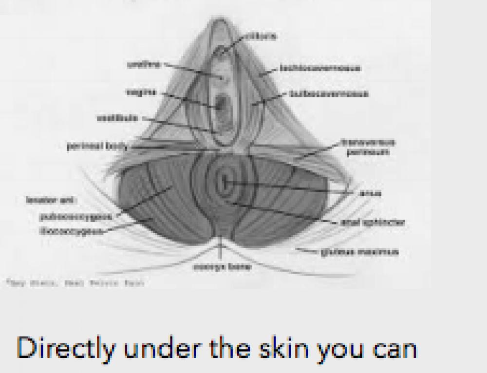 Pelvic MRI: Can You Identify the Structures? | Pelvic Guru